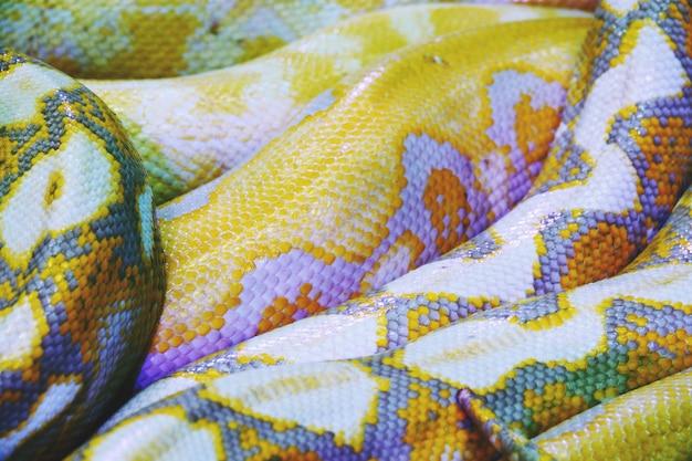 Albinopythonschlangenhautbeschaffenheits-hintergrundabschluß oben Premium Fotos