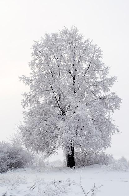 Alles ist mit schnee bedeckt. fabelhafte weihnachten Premium Fotos