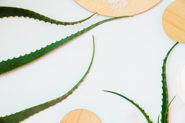 Aloe vera blätter zur schönheitsbehandlung Kostenlose Fotos