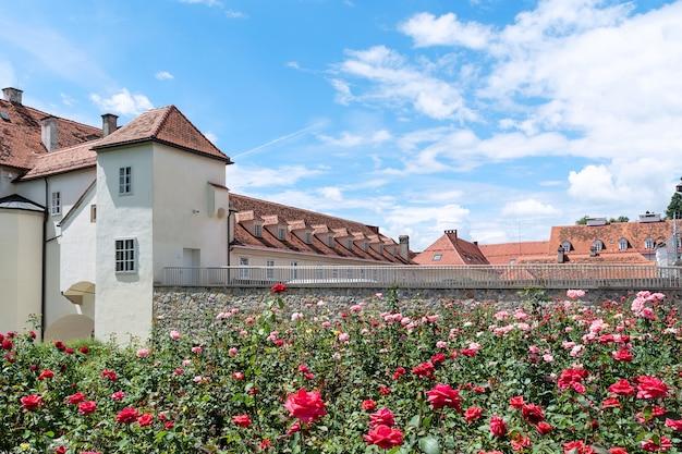 Altbauten mit rot-mit ziegeln gedeckten dächern vor dem hintergrund der blühenden rosen. Premium Fotos