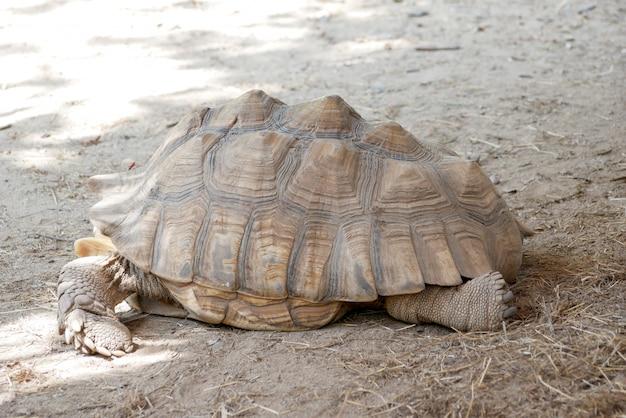 Alte braune schildkröte im zoo Premium Fotos