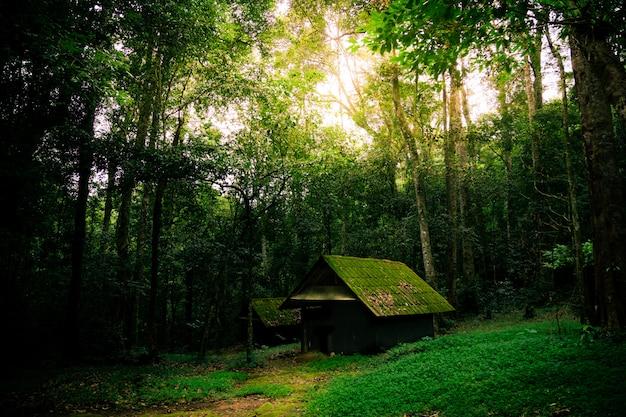 Altes häuschen in freier wildbahn Premium Fotos