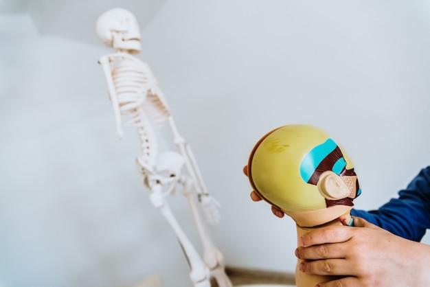 Anatomieunterricht für kinder mit einem dummy des menschlichen körpers Premium Fotos