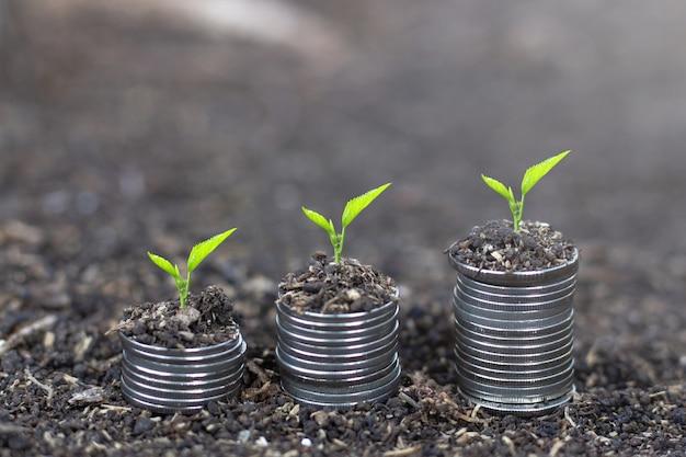 Anlage, die auf geldmünzenstapel wächst. nachhaltige entwicklung finanzieren Premium Fotos