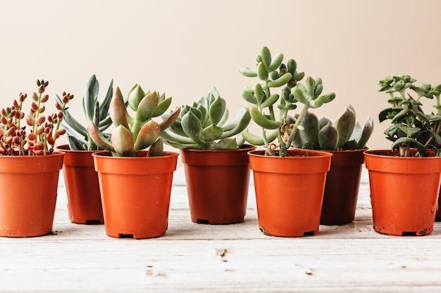 Anordnung der sukkulenten oder kaktussukkulenten Premium Fotos