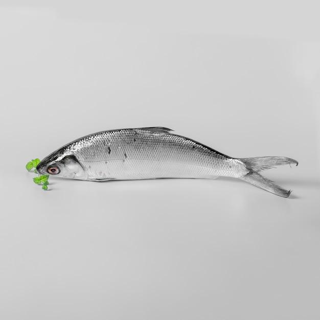 Anordnung mit geschmackvollen fischen auf weißem hintergrund Kostenlose Fotos