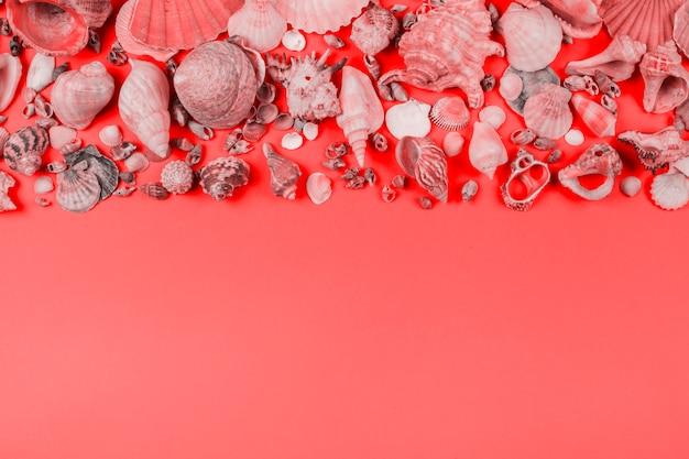 Ansammlung muscheln auf korallenrotem hintergrund Kostenlose Fotos