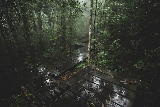 Ansicht des tropischen waldes, khao yai national park, thailand Premium Fotos