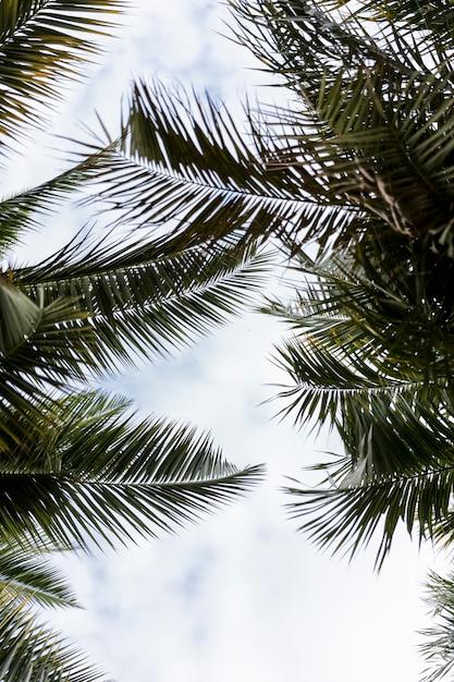 Ansicht von unten der grünen exotischen blätter Kostenlose Fotos