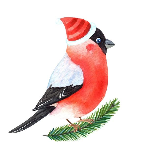 Aquarell-gimpel. winter robin vogel mit roten brustfedern. Premium Fotos