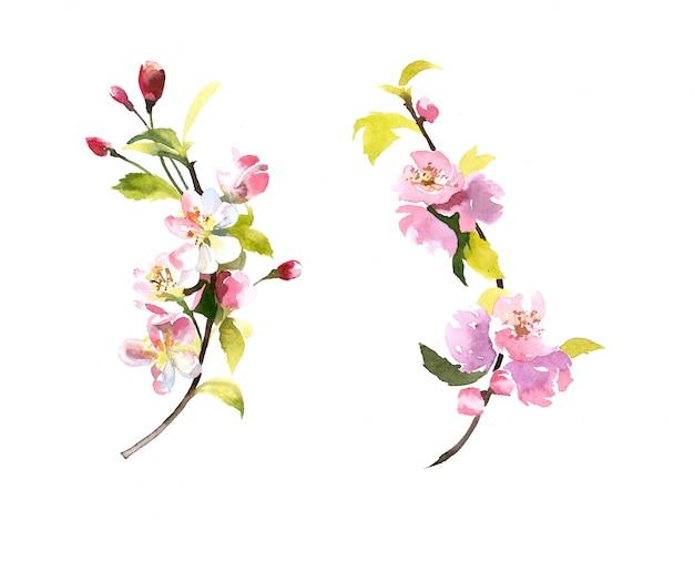 Aquarell handgemalte blütenzweige lokalisiert auf weiß Premium Fotos