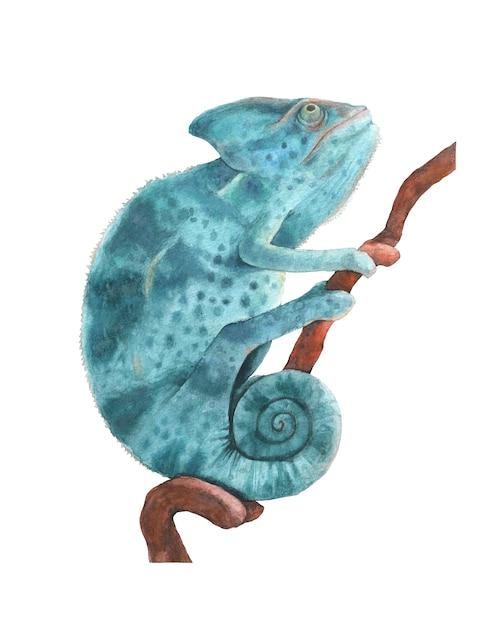 Aquarellillustration des blauen pantherchamäleons lokalisiert Premium Fotos