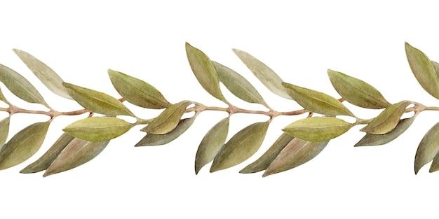 Aquarellillustration einer grenze mit blättern, früchten und olivenöl. öl und aromatische kräuter Premium Fotos