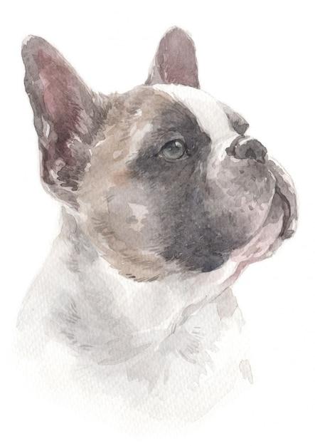 Aquarellmalerei der französischen bulldogge Premium Fotos