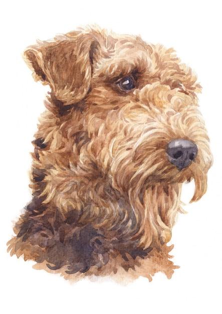 Aquarellmalerei, hundelockenhaar airedales terrier Premium Fotos