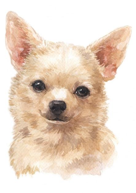 Aquarellmalerei von chihuahua Premium Fotos