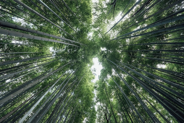 Arashiyama-bambushainwald in japan Kostenlose Fotos