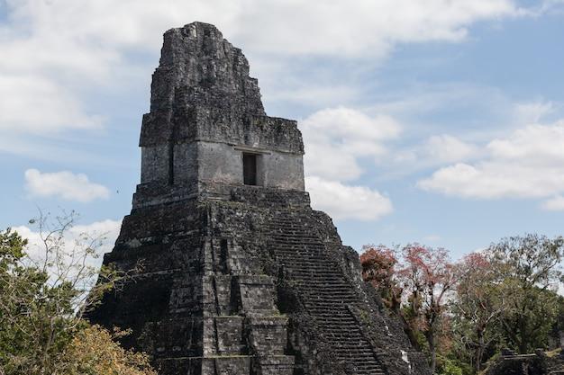 Archäologische ausgrabung der maya-tempelpyramide im grünen regenwald des tikal-nationalparks Premium Fotos