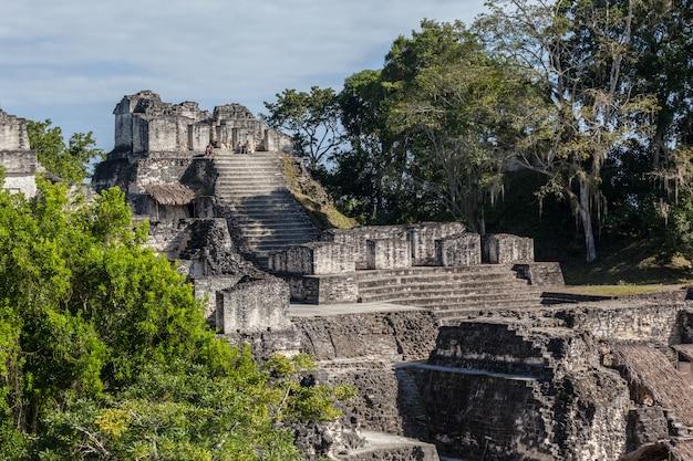 Archäologische ausgrabung der maya-tempelpyramiden im grünen regenwald des tikal-nationalparks Premium Fotos