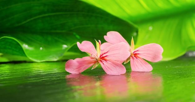 Aromatherapie mit geranium blume Premium Fotos