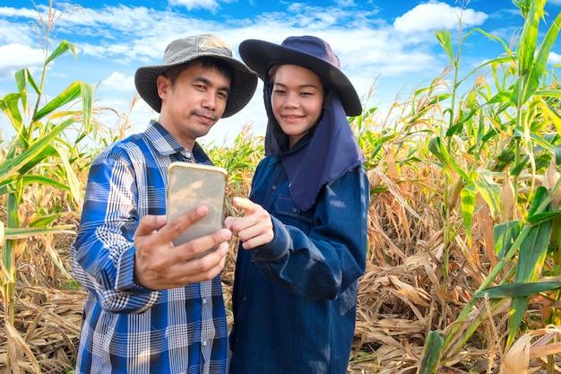 Asiatische paarlandwirte, die smartphone am maisbauernhof verwenden Premium Fotos