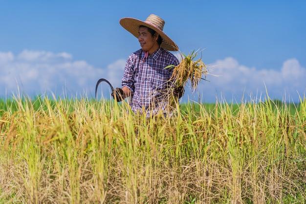 Asiatischer landwirt, der auf dem reisgebiet unter blauem himmel arbeitet Premium Fotos