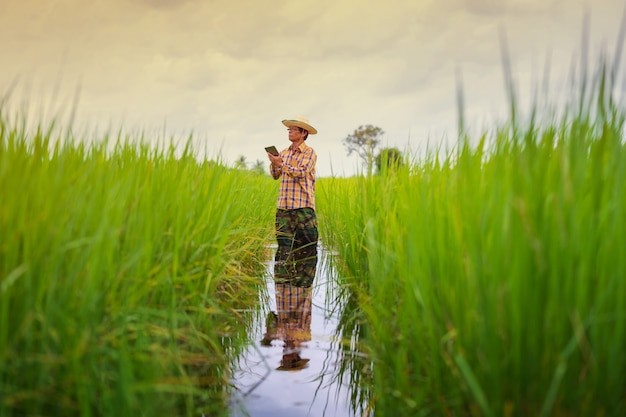 Asiatischer landwirt, der digitales tablet auf einem grünen reisgebiet, intelligentes technologielandwirtschaftskonzept verwendet Premium Fotos