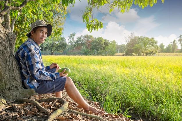 Asiatischer landwirtmann, der unter mangobaum am reisbauernhoffeld bei thailand sitzt Premium Fotos
