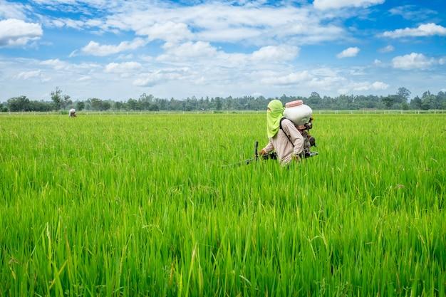 Asiatischer thailändischer landwirt zu den herbiziden oder zu den mineraldüngern ausrüstung auf dem grünen reisanbau der felder Premium Fotos