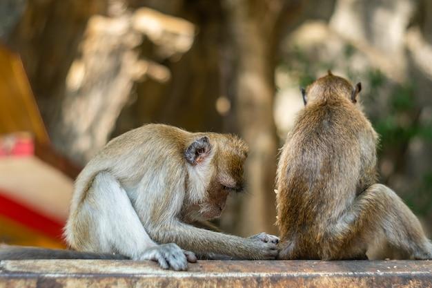 Asien-affenwild lebende tiere, sorgfalt und familienkonzept Premium Fotos