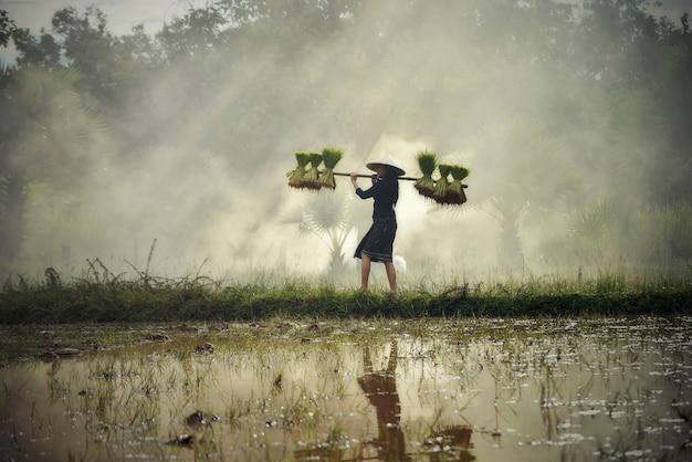 Asien-frauenlandwirt, der reispflanze auf der schulter geht auf dem reisgebiet hält Premium Fotos