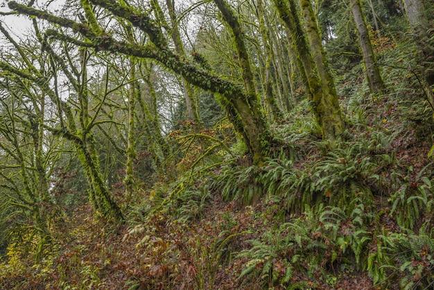 Atemberaubende aussicht auf die moosbedeckten bäume und farnpflanzen inmitten eines tropischen waldes Kostenlose Fotos