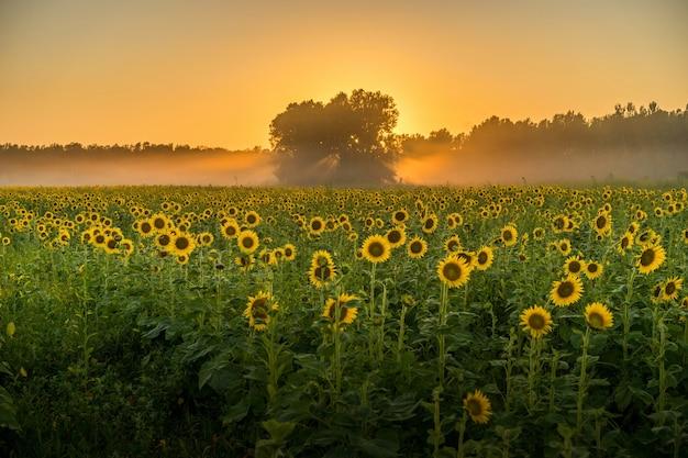 Atemberaubende aussicht auf ein feld voller sonnenblumen und bäume Kostenlose Fotos