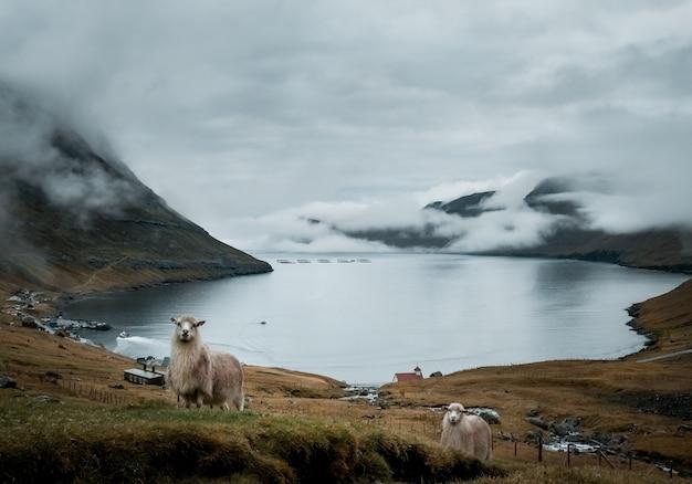 Aufnahme der wunderschönen natur wie der klippen, des meeres und der berge der färöer Kostenlose Fotos