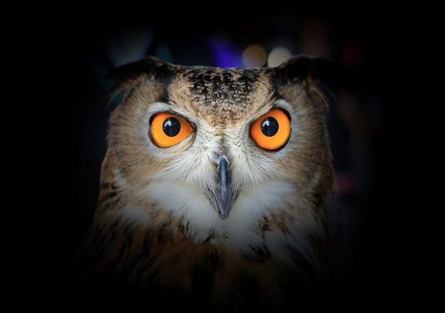 Augen von eagle owl auf dunkelheit. Premium Fotos