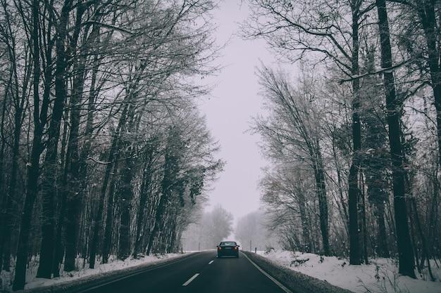 Auto auf der straße durch einen winterpark Kostenlose Fotos