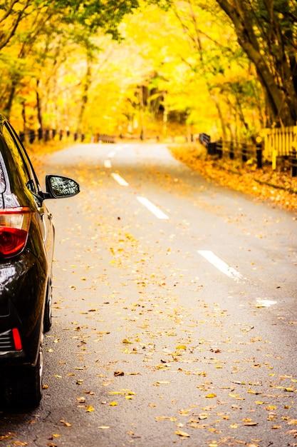 Auto auf der straße im herbstwald Kostenlose Fotos