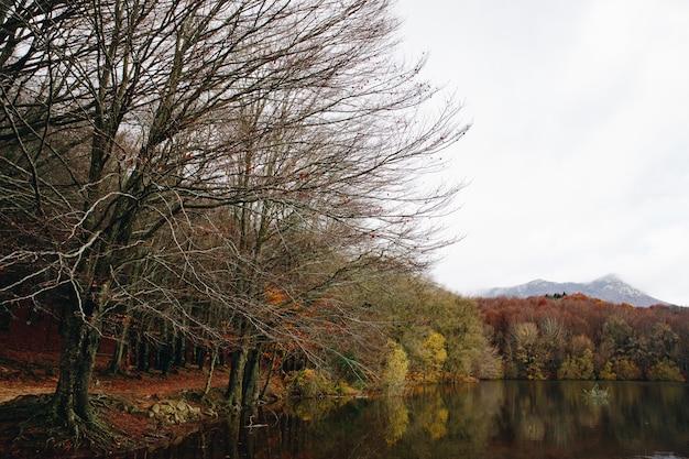 Autumn landscape von bunten wald- und wasserreflexionen im see Premium Fotos