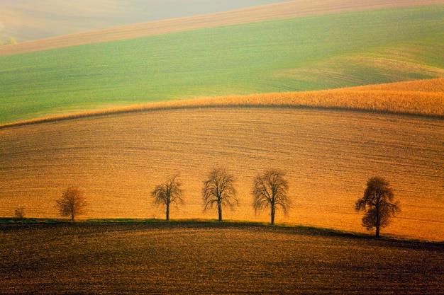 Autumn south moravian-landschaft mit fünf bäumen und rolling waving hills Premium Fotos