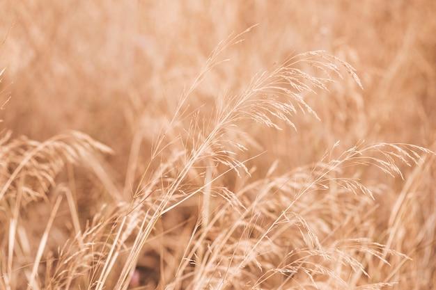 Autumun landschaft mit einem weizenfeld Kostenlose Fotos