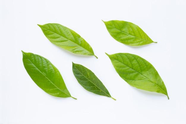 Avocadoblätter auf weiß. Premium Fotos