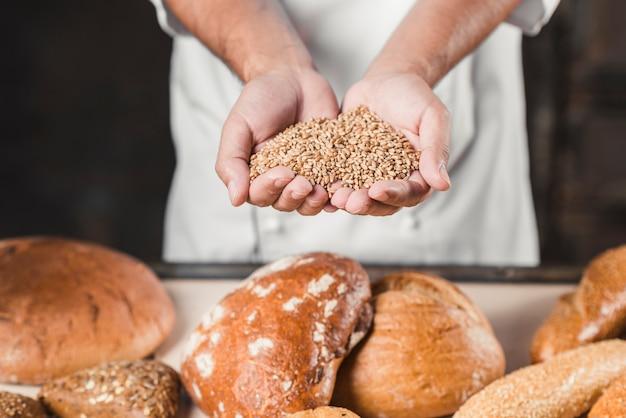 Bäcker, der weizenkörner in den händen vor gebackenem brot hält Kostenlose Fotos