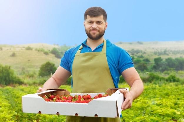 Bärtiger mann von mittlerem alter, der auf einem erdbeergebiet mit einem kasten frischen erdbeeren steht Premium Fotos