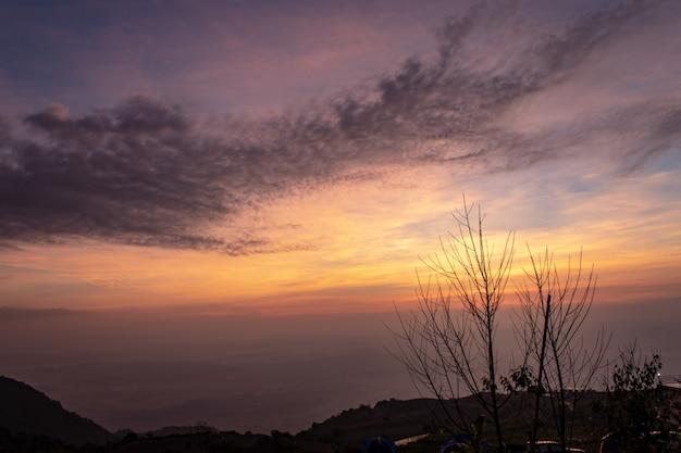 Bäume am berg und die morgensonne. Premium Fotos