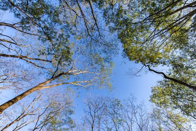 Bäume am ribeirao preto stadtpark, alias curupira park Premium Fotos