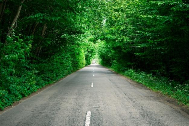 Bäume bilden einen künstlichen tunnel über der straße. schöne landschaft Premium Fotos