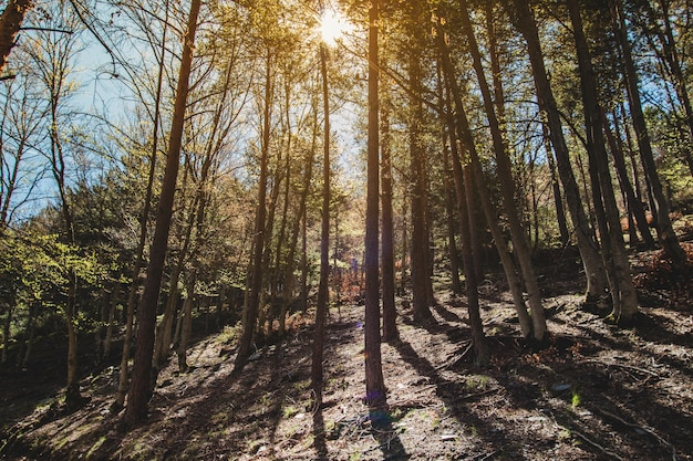 Bäume Schatten