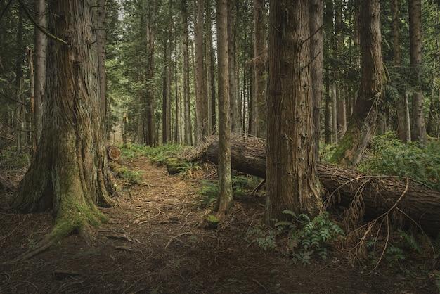 Bäume des geheimnisses Kostenlose Fotos