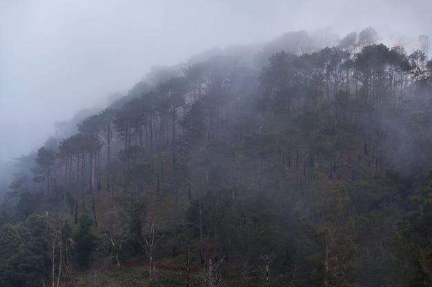Bäume im nebel Premium Fotos