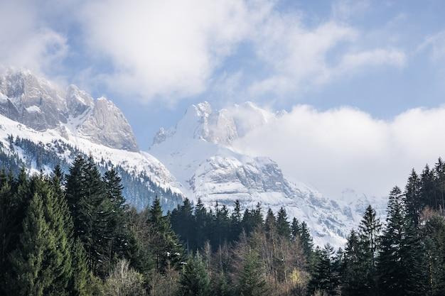 Bäume mit schneebedeckten bergen Kostenlose Fotos
